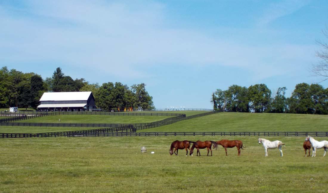 Bike horse country Kentucky