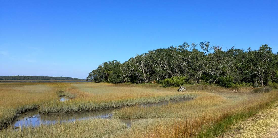 Pinckney Island salt marsh