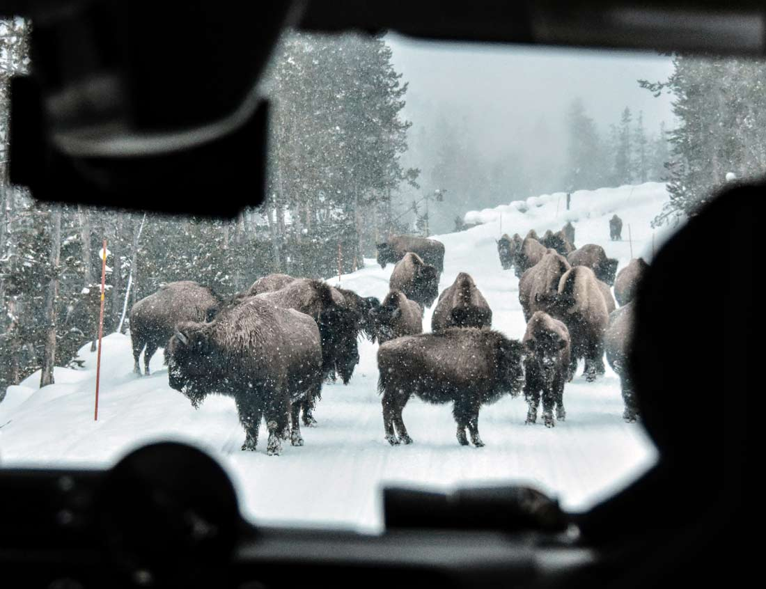The only traffic jam you'll experience in winter is when bison or other wildlife use the road to move to a new grazing spot.