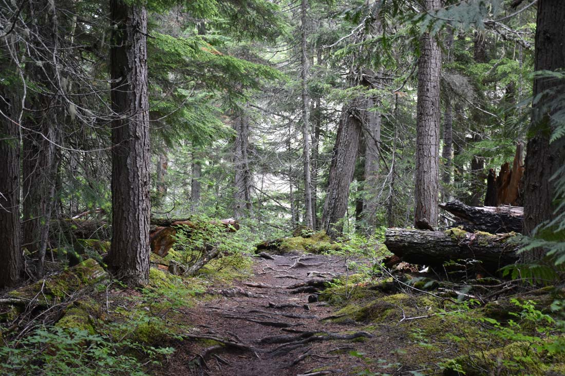 Best hike in Yoho National Park