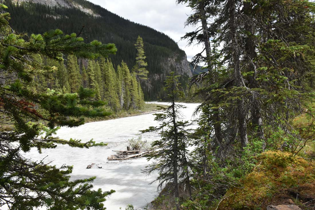 Why are some glacier rivers and lakes milk white rock flour