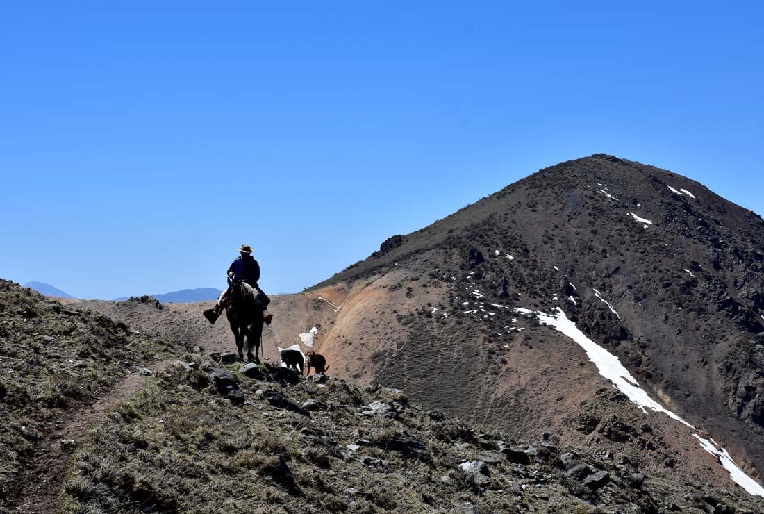 Andes estancia gaucho horse