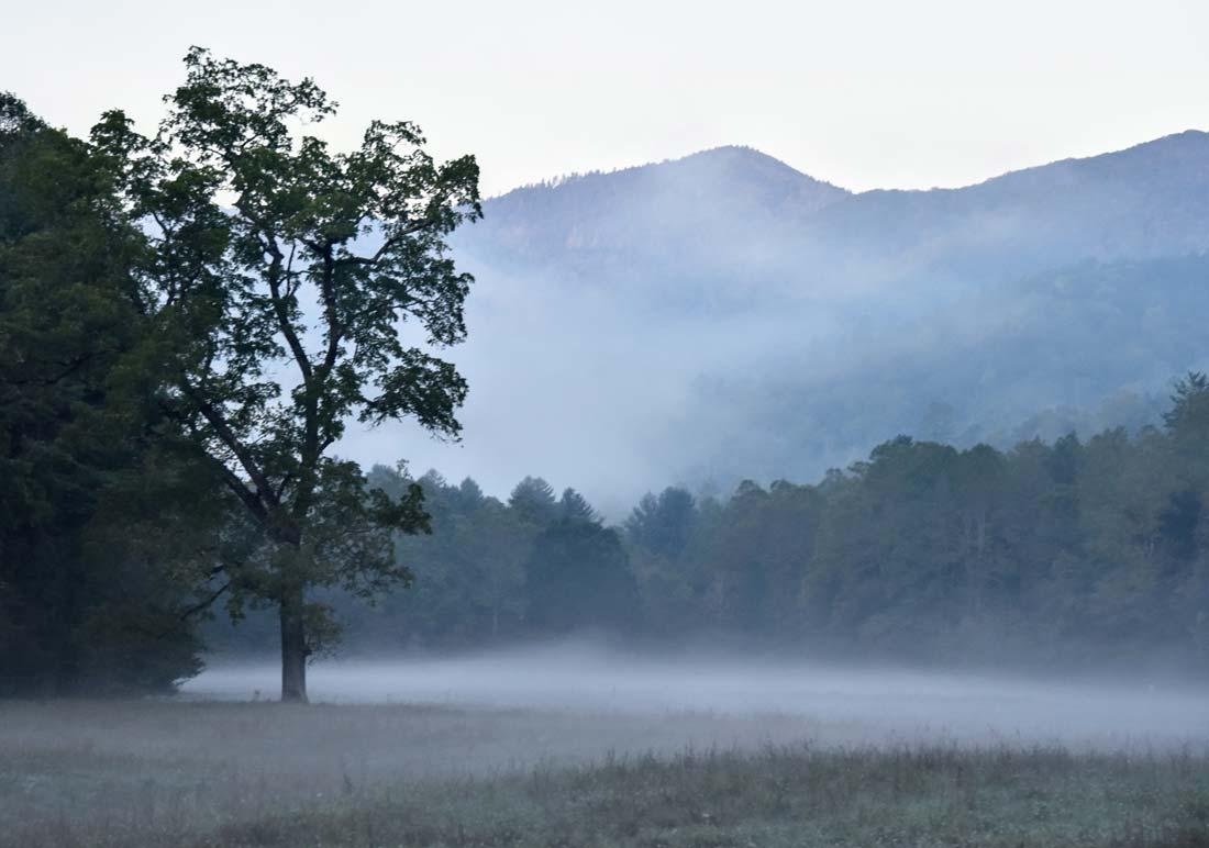 Morning fog Cataloochee Valley