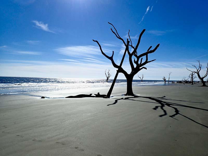 Cape Romain's Boneyard Beach