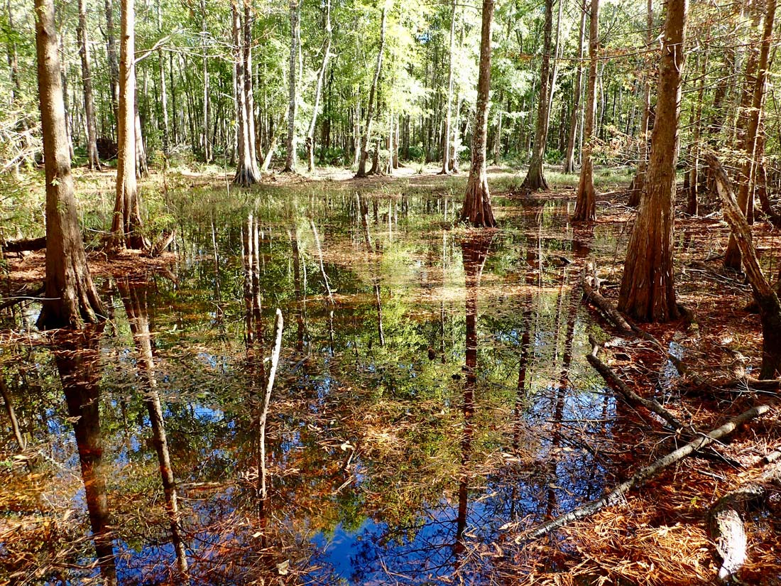 Cool hikes near Charleston Ion Swamp Trail