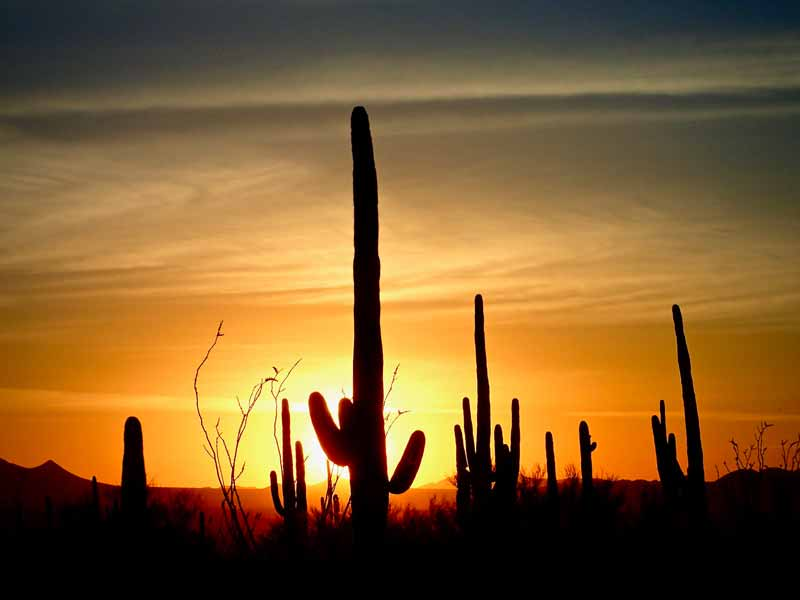 evening drive iwest district of Saguaro National Park