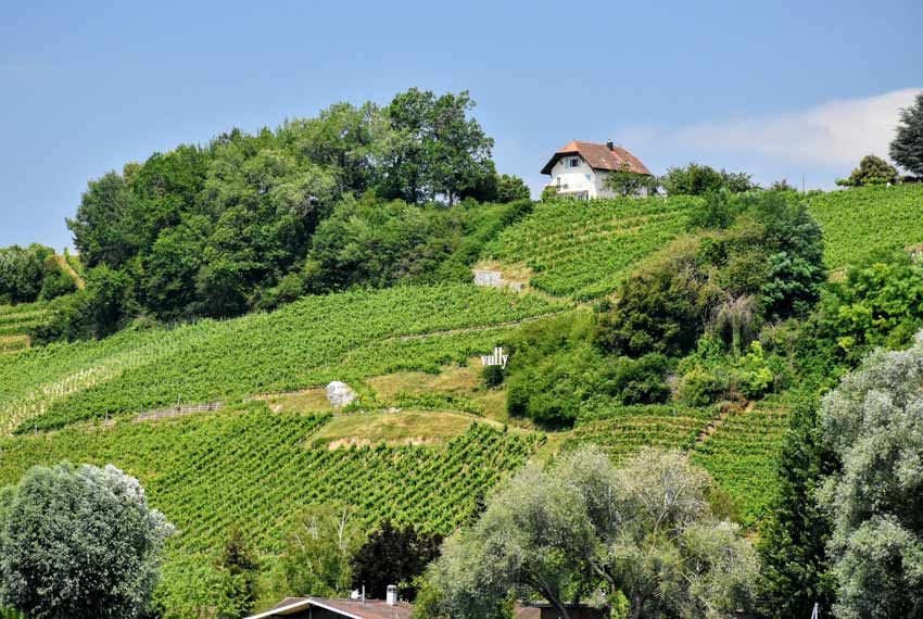 Wine region boat tour murten