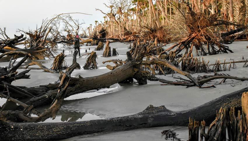 boneyard beach charleston sc