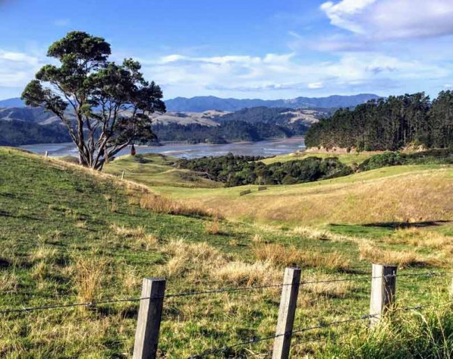 new zealand Coromandel Peninsula