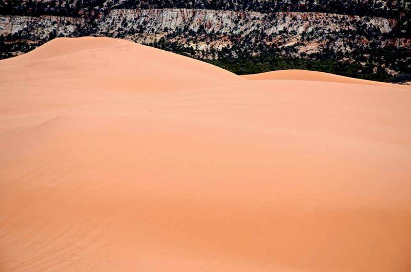 Coral Pink Sand Dunes Utah plants insects