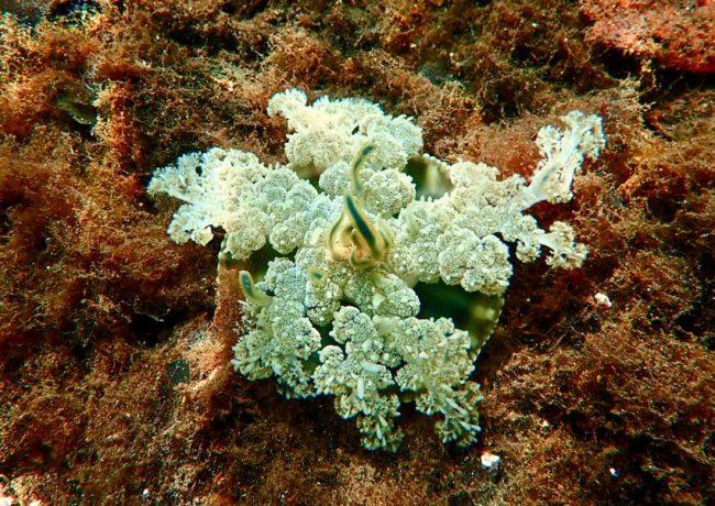 Biscayne National Park Snorkeling Jellyfish
