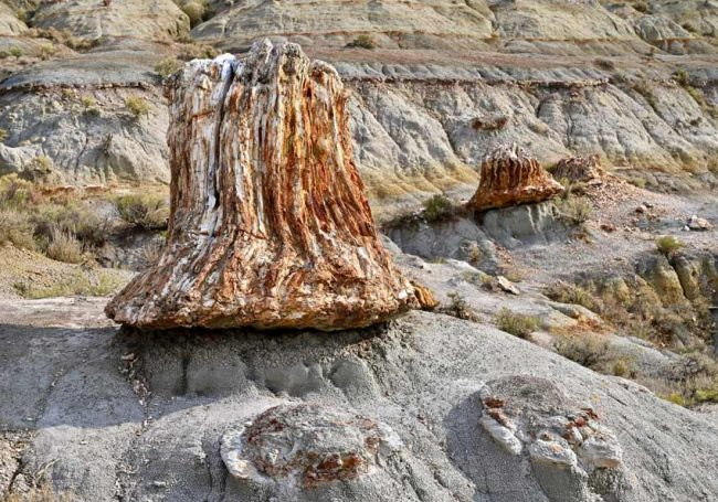 petrified forest trees theodore roossevelt national park best place see