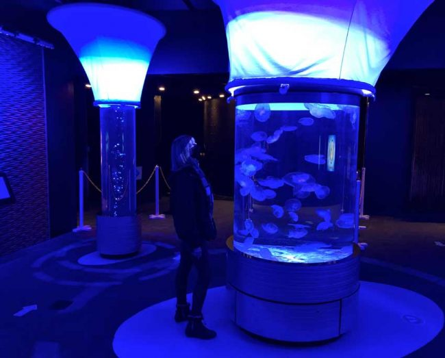 The jellyfish exhibit was one of our favorites at the Roanoke Island aquarium.